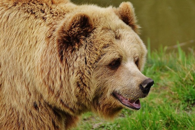 What to Do When A Bear Attacks You While Camping