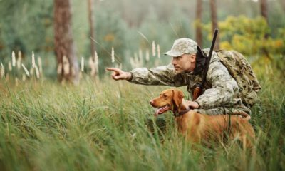 hunter-rifle-dog-forest Hunting In Pennsylvania | Featured